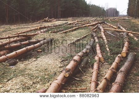 Environment, Nature And Deforestation Forest Concept - Felling Of Trees In The Woods