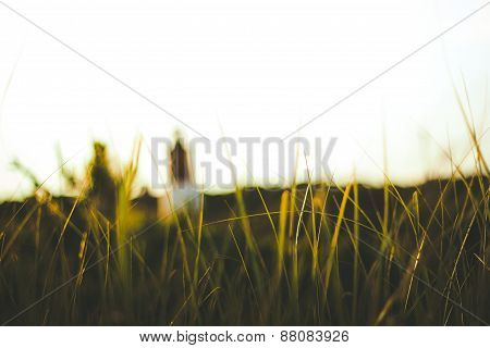 Tall grass with lighthouse in the distance