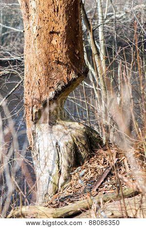 Forest Textured Background