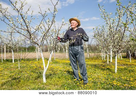 Portrait of an elderly man in flowered cherry orchard. Selective focus