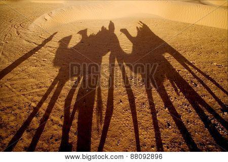 Sahara's Desert