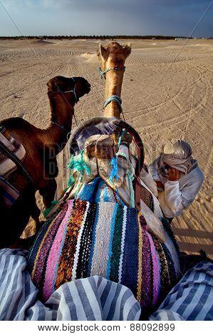 Saddle In Sahara