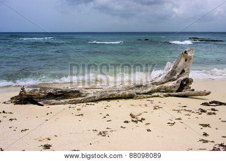 Rock Stone And Tree In  Republica Dominicana