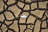 pic of water shortage  - fish died on crack ground due to drought and river dried up - JPG