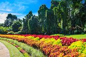 pic of royal botanic gardens  - Multicolored alley of flowers and trees in the Royal Botanic Gardens Kandy - JPG