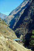 foto of sherpa  - Village in  Nepal - JPG