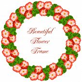 stock photo of geranium  - Vintage flower frame with geranium - JPG