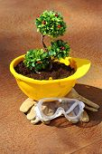 picture of environmentally friendly  - Green plant in yellow helmet on rusty background  - JPG