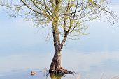 stock photo of flood-lights  - Flooded tree after heavy rainfall and increased level of the lake - JPG