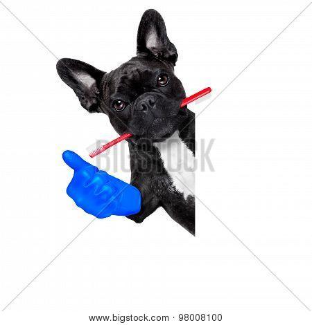 Dentist Toothbrush Dog