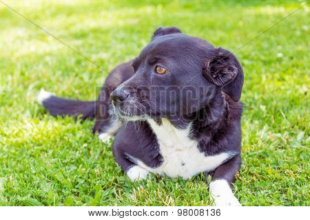 Dog on the grass.