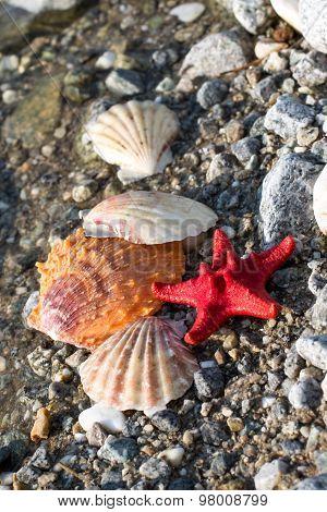 Red Sea Star, Sea Shells, Stone Beach, Clean Water Background