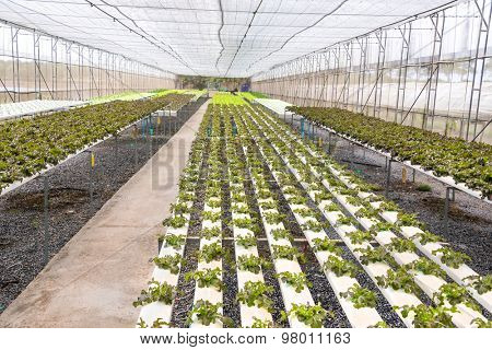 greenhouse with young plants in the Rayong Thailand