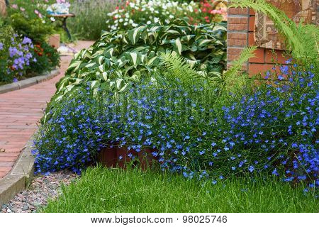 Blue Flower Bed In Summer