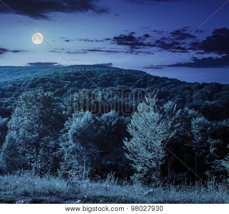 Forest On Hillside Meadow In Mountain At Night