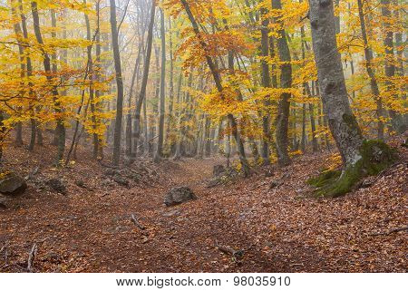 Forest landscape with fog in Crimean mountains