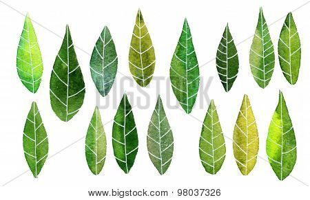 set of abstract green leaves in watercolor