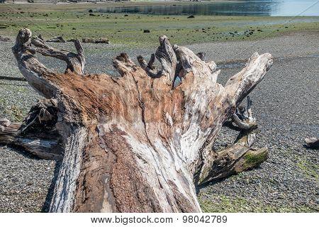 Driftwood Tree Landscape 4