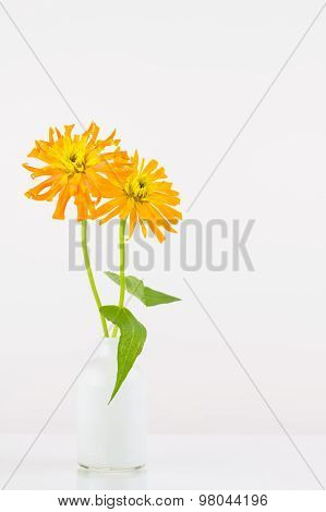 Orange Zinnia Flowers In Vase