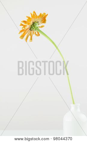 Minimalist Flower Arrangement
