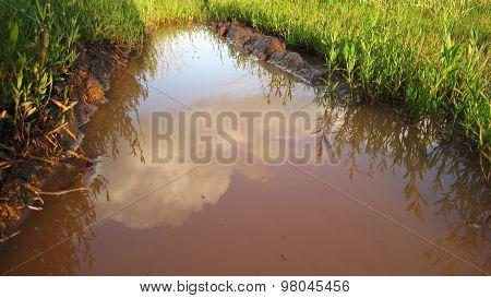 Flooded Tire Tracks
