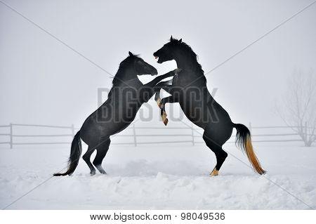 Beautiful horse running in winter