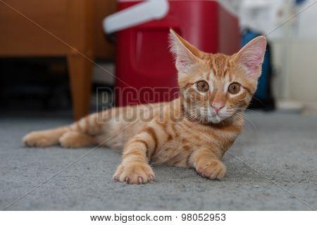 Kitten instinctively looks up