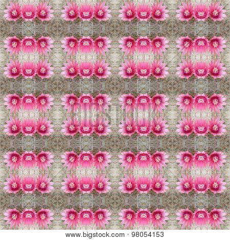 Cactus Flower Seamless Pattern Background