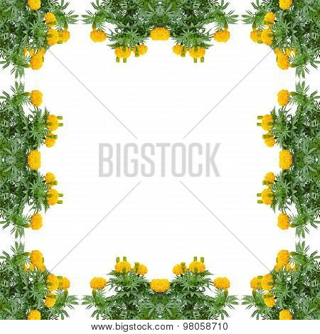Marigold Frame Isolated On White Background