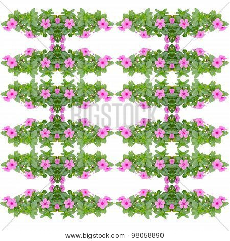Periwinkle Seamless Pattern Isolated On White Background
