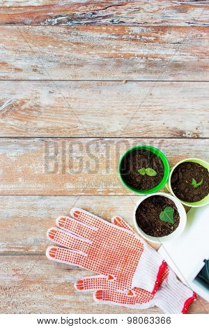gardening and planting concept - close up of seedlings, garden gloves on table