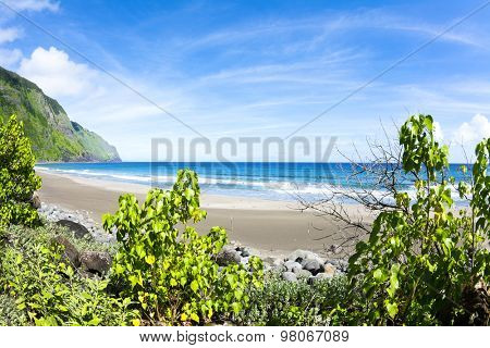 View of a tropical beach from the cover of vibrant, green foliage