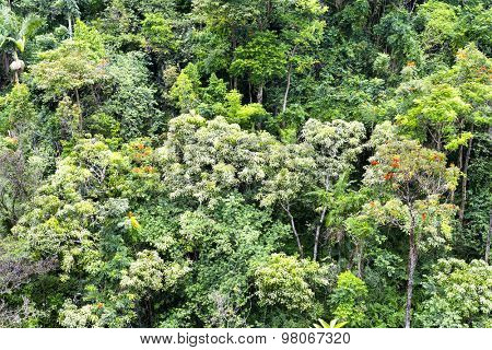 Tropical foliage along a rainforest mountainside in Hawaii shows a lush display of rich, healthy plant and tree life.