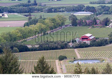 Napa Valley Landscape