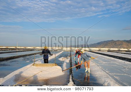Salk workers work in salt field in Vietnam