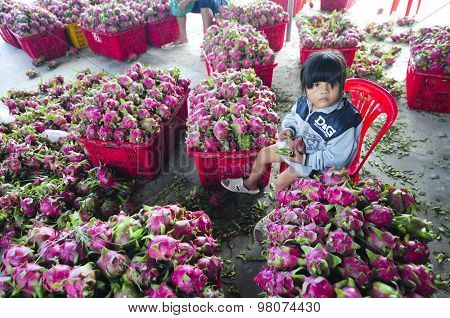 little girl among baskets of dragon fruit