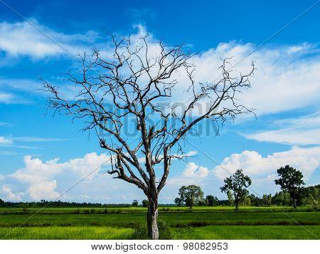 Witered Tree