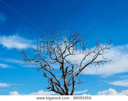 Pattern of tree on blue sky