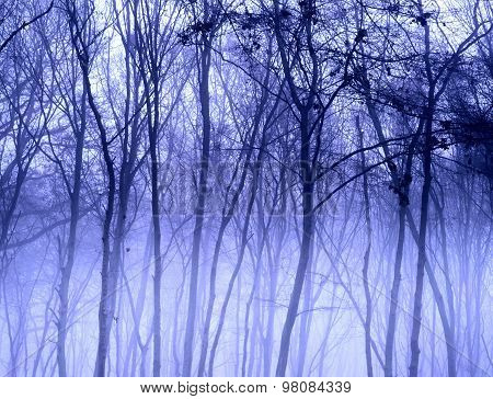 Winter trees in a forest landscape