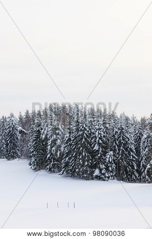 Snow covered forest and field