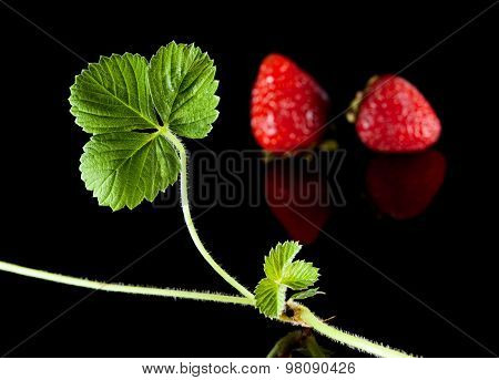Strawberries And Sprout