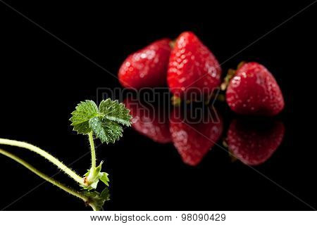 Three Ripe Strawberry And Sprout
