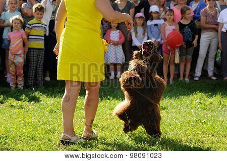 Orel, Russia, August 01, 2015: Mumu Fest, Turgenev's Story Art-festival, Dogs Parade, Poodle