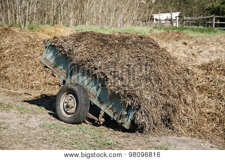 Close-up Of Horse Manure Mixed With Hay On A Horse Farm