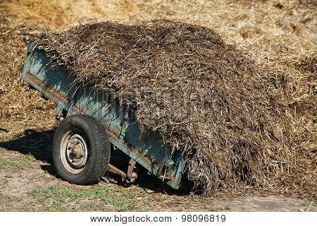 Big Dung Pile On A Wagon At A Horse Farm Summertime
