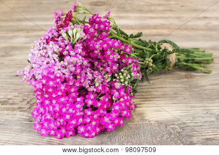 Yarrow Flower, Herbal Plants On Wooden Table