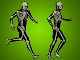 pic of male body anatomy  - Concept or conceptual 3D human man or male skeleton anatomy transparent body over green gradient background - JPG