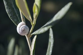 foto of garden snail  - white snail shell on a sage plant in the herb garden selected focus narrow depth of field and copy space - JPG