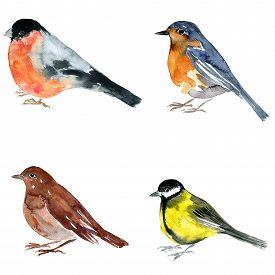 pic of nightingale  - watercolor drawing bird - JPG