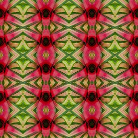 image of bromeliad  - Bromeliad flower seamless pattern background - JPG